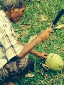 Balinese coconut farmer