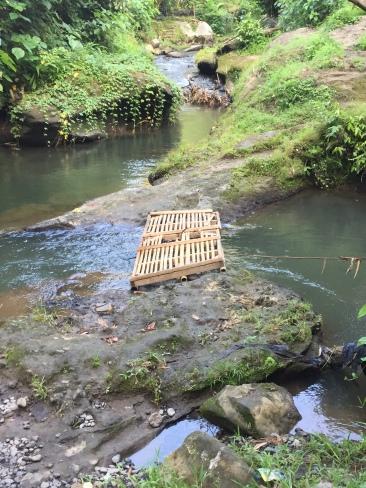 "Makeshift bamboo ""bridge"" at start of Campuhan Ridge walk"
